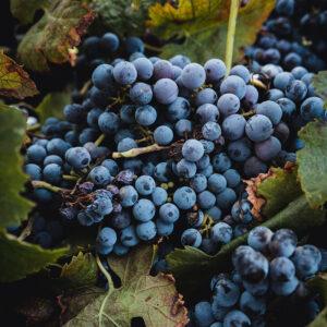 Cantina-Marilina-wine